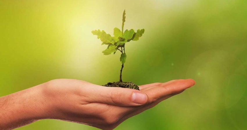 Wir pflanzen mit Ihnen einen Baum am Samstag, den 17.Oktober 2020 um 14.00 Uhr.